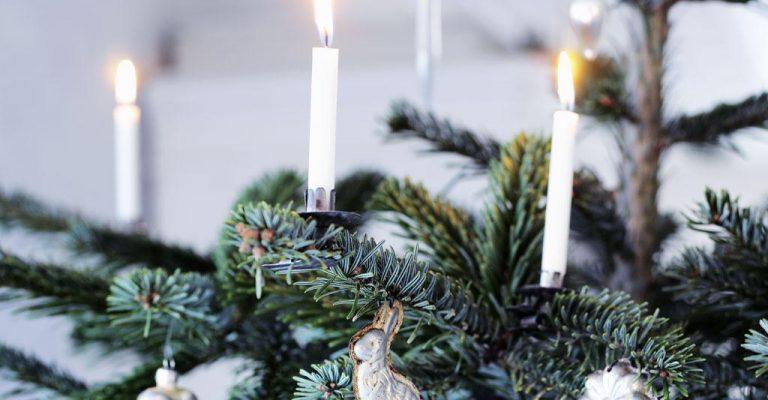 Juletræet tændes i Rørvig - det sker i Rørvig